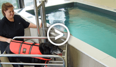 Canine Aquatic Therapy Photos