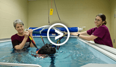Canine Aquatic Therapy Videos